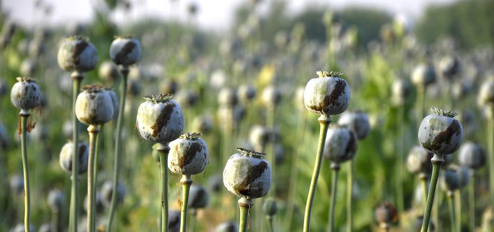 топ 10 опасных наркотиков